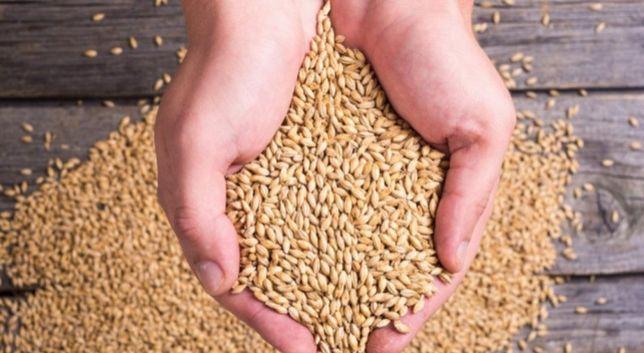 Пшеницу оптом звоните
