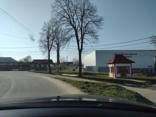 Casă bătrânească Curtești 1000m2