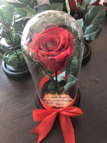 Aranjamen cu trandafir criogenat in cupola de sticla