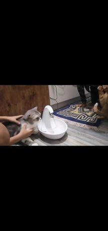 Поильник фонтан для кошек