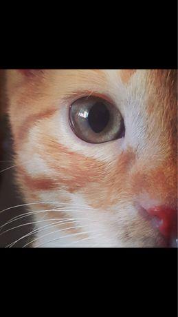 Супер кот,милый друг,отличный крысолов.