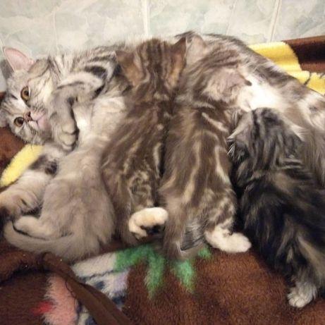Чудесные котятки, фото настоящие