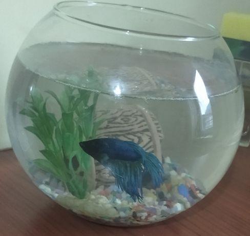 Продам аквариум с рыбкой.