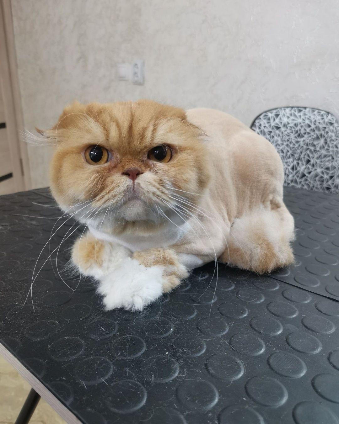 Стрижка кошек без седации