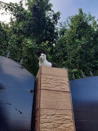 Donez o pisicuta 2 ani în braila nu facem transport