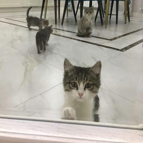 Отдам бесплатно котят