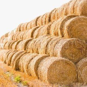 Свежее сено тюках в рулонах предоставляем с доставкой