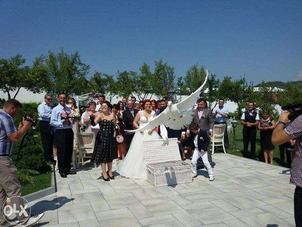 Inchiriere porumbei albi pt nunti si alte evenimente!