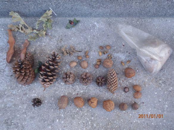 Декоративни шишарки, орехи, жълъди, кестени и САХАРСКИ пясък.