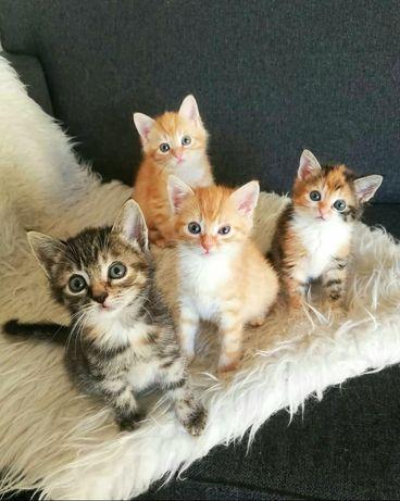 Здоровые котята в дар