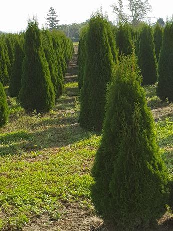 Plante ornamentale o gama foartr mare la cele mai bune preturi