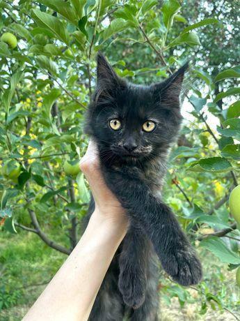 Отдам котенка даром