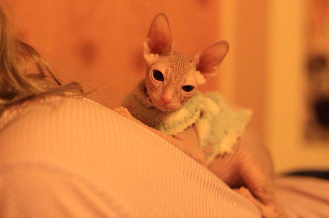 Котики-сфинксики