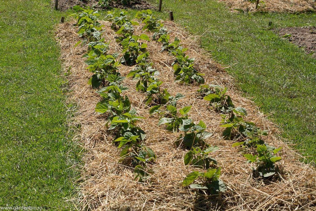 materiale vegetale pentru mulcire asiguram transport
