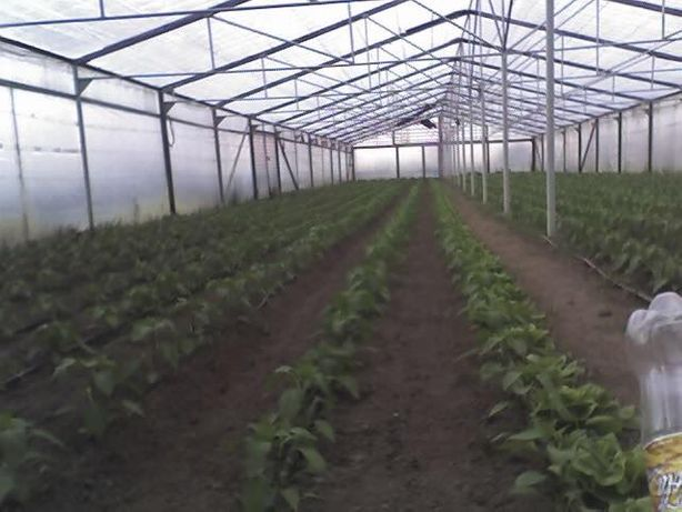 Solar gradina cu schelet metalic 500 m²( 46 m x 11 m)