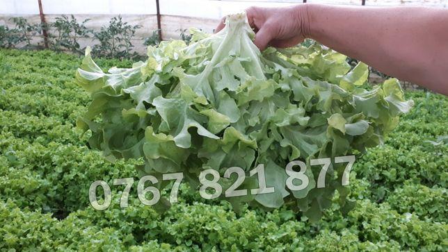 Vand Salata Verde Creata