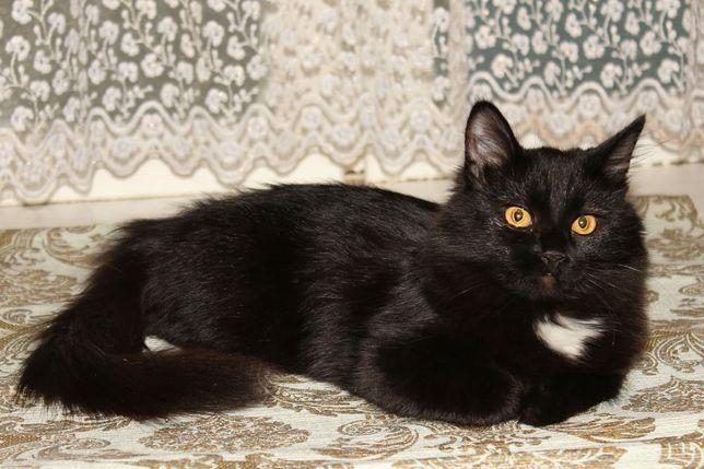 Кошка девочка, возраст примерно 4 месяца