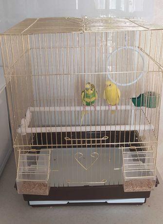 Продам двух красивых волнистых попугаев