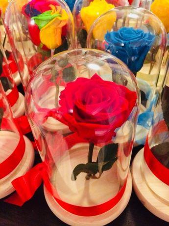 Trandafir criogenat ideal pt cadou