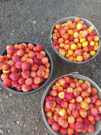 Продам яблоки недорого
