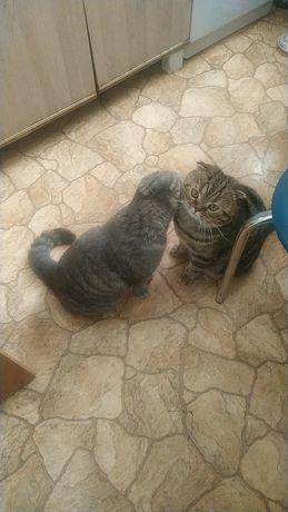 Кот ищет кошку для спаривания