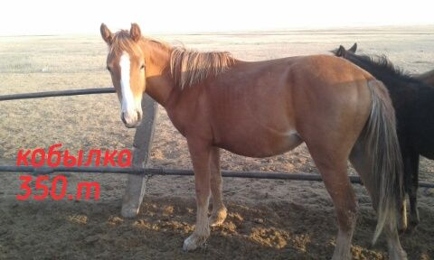 Лошади полторашки.