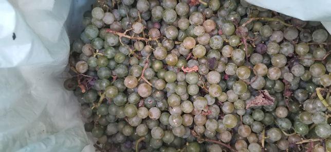 Struguri nova pentru vin