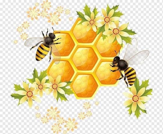 Мед разнотравье 1400 тг кг
