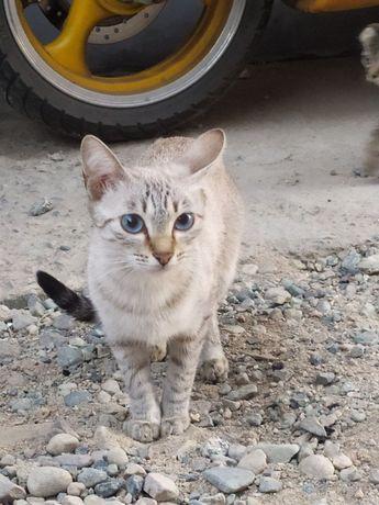 Отдам даром кошку с котятами в хорошие руки!!!