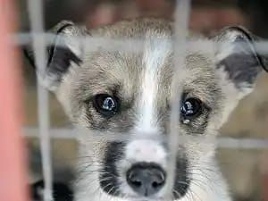 Народ, давайте спасём собак!