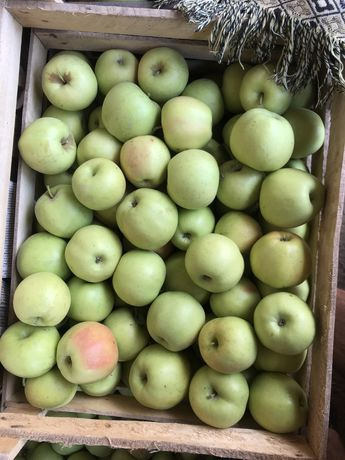 Яблоки золотой