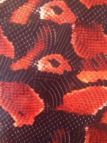 Фолио за хидрографика Snake red boa 50