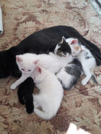 Животные котята отдам
