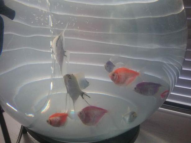 Продам аквариум с рыбками, улитками, фильтром и украшениями