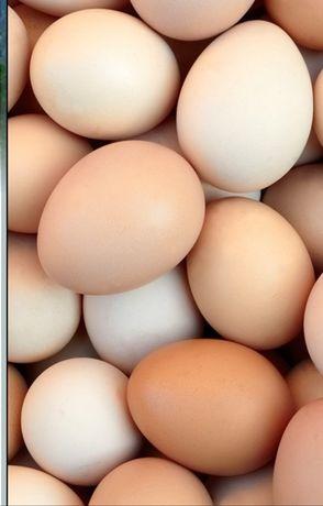 ДОМАШНИЕ ЯЙЦА.  Предлагаю домашнее куриное яйцо.