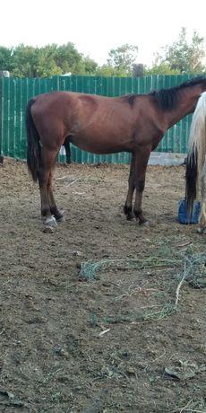 Лошади, Тай. В караганде