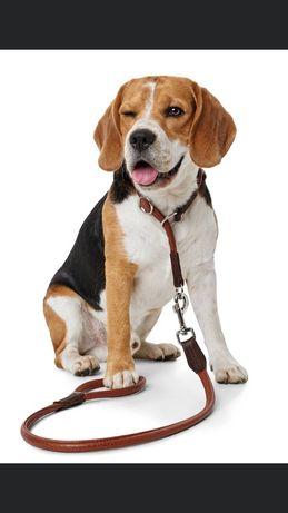 Предлагам разходки,грижи и домашен хотел за кучета