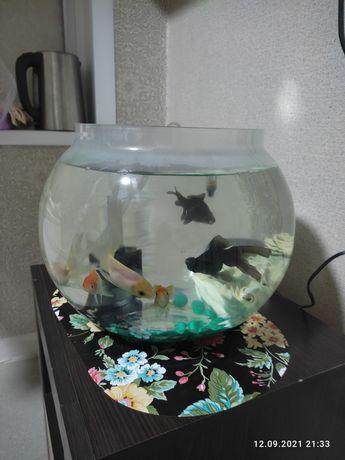 Продам аквариум круглый