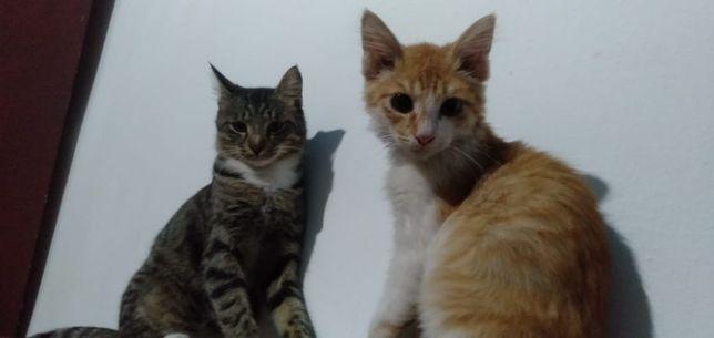 Коты! Мальчики! В добрые руки