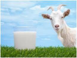 Продается козье молоко, Ешки суты сатылады