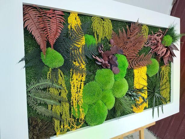 Tablou cu licheni,muschi si plante conservate dimensiuni rama 130/80cm
