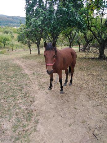 Vând cal
