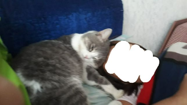 Пропал кот.вознаграждение 10000т