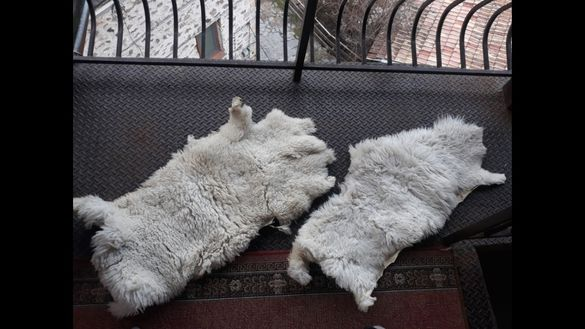 Овчи кожи