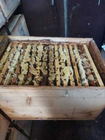 Vand miere de albine