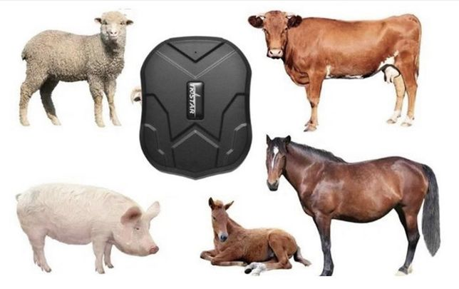 GPS для лошадей/ малга арналган Ошейник 905B