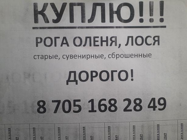 Здравствуйте звоните договоримся дорого!