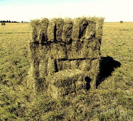 Продам сено в тюках житняк с луцерной и разнотравья