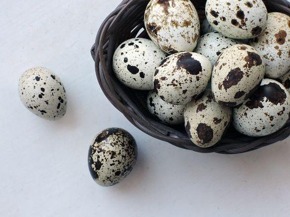 Яйца от пъдпъдъци ,пъдпъдъци носачки , клетки пътпъдъци и люпене