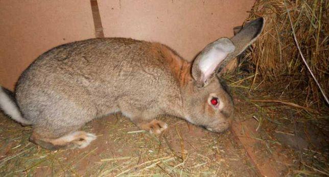 -Продам кроликов